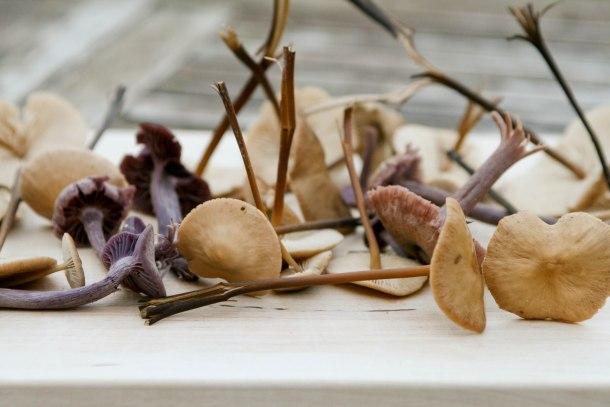 Sort gryde med oksekød og svampe fra skoven